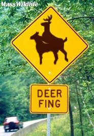 deer fing sign